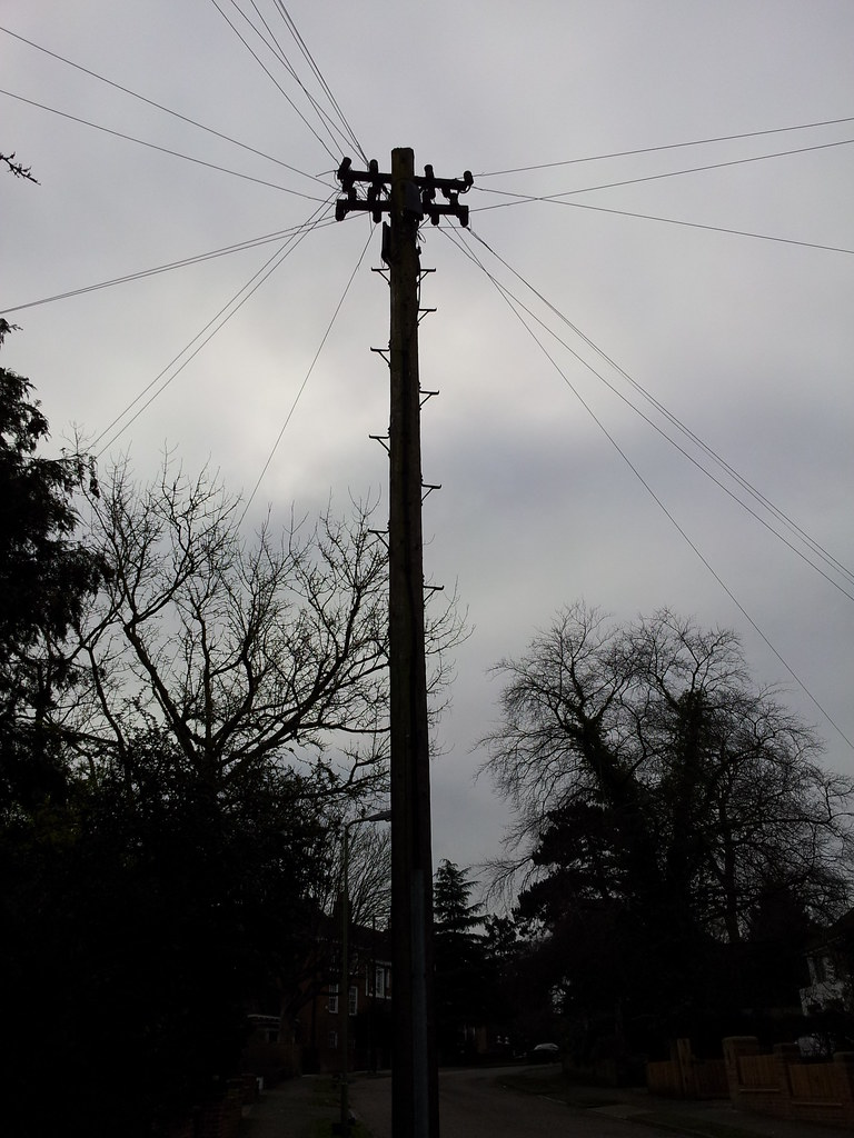 Photograph of a telephone pole with its crest above the treeline, its cables stretching in every direction.