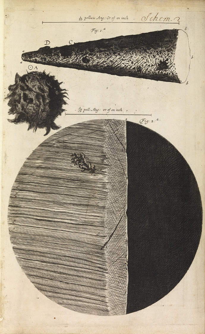 Robert Hooke's drawings of a pin's head and razor's edge as seen through a microcope